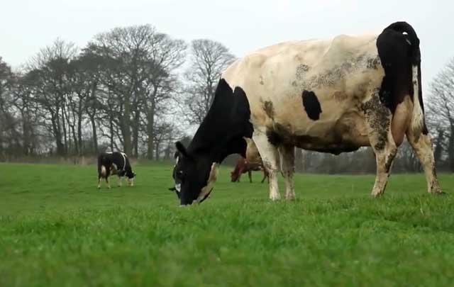 Профилактика - залог здоровья животных