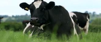 Из-за болезни животное постоянно мучается и может умереть