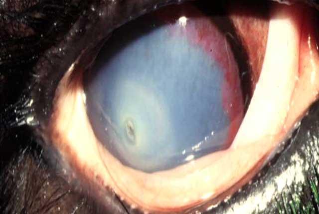 Сильное помутнение глаза