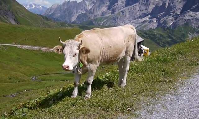 Состояние животного зависит от скорости развития болезни