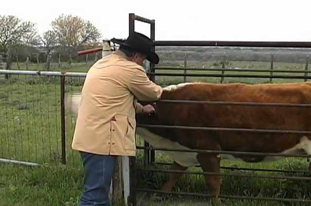 При вспышке болезни нужно изолировать пострадавших животных
