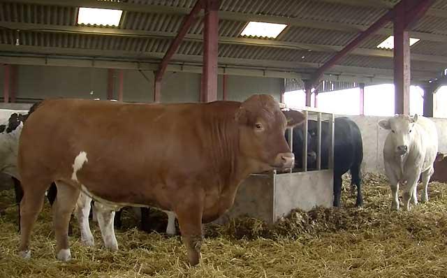 Условия содержания коров влияют на результаты лечения