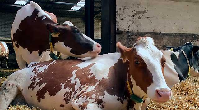 Чтобы животные могли кушать, проводят анестезию