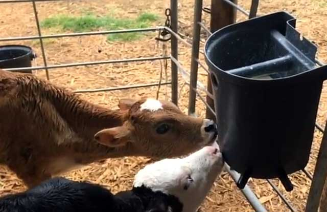 Следите за чистотой корма