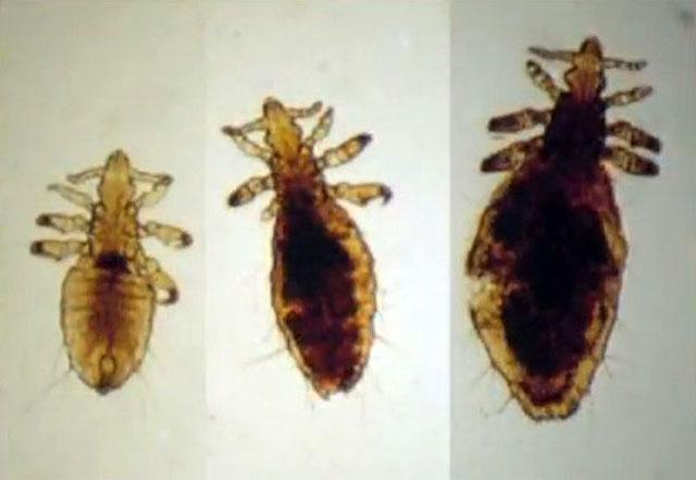 паразиты наносят большой ущерб
