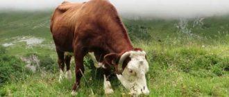 Заболевание расстраивает пищеварительную систему животных