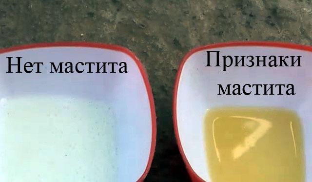 При воспалении молоко меняет цвет
