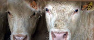 Полноценное кормление животных – залог успешности фермы