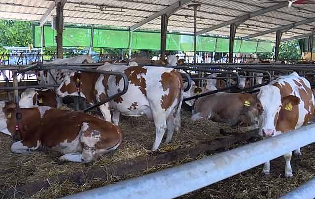 Загон для скота