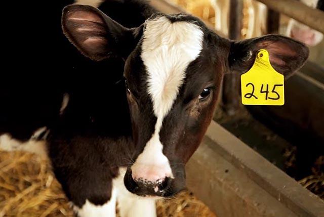 В первые два месяца дают только молоко