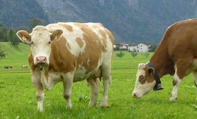 Животным нужны витаминно-минеральные вещества