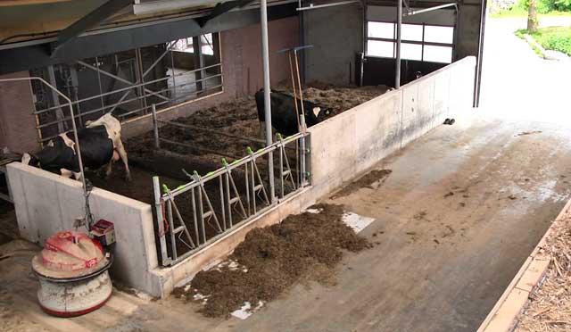 Коровник должен находиться в 15 метрах от жилого дома
