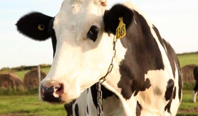 Затяжное кормление молоком может привести к проблемам