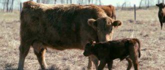 Общение матери и малыша