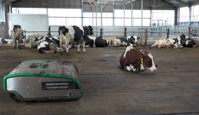 Помещение нужно не только коровам, но и для хранения кормов