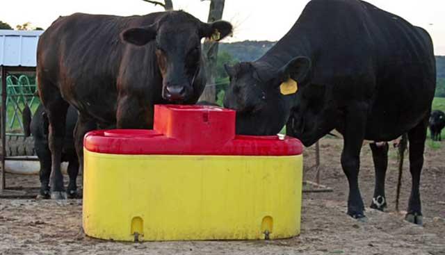 Животным нельзя давать холодную воду