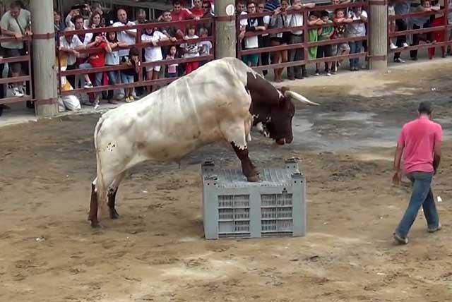 Качества животного можно разглядеть на выставке