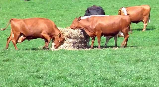 Кормят животных разнообразно