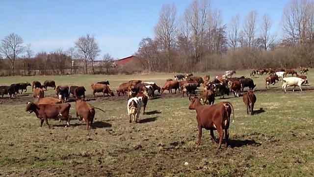Сельское хозяйство - ведущая отрасль