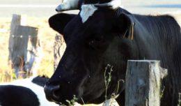 Структура и воспроизводство коровьего стада
