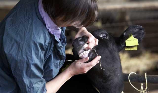 По зубам животного можно определить его возраст