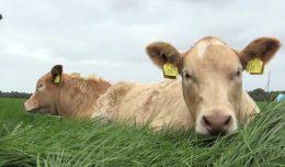 Оценка продуктивности коров