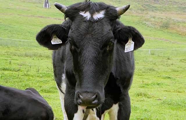 Раньше предпочитали кушать только бычков