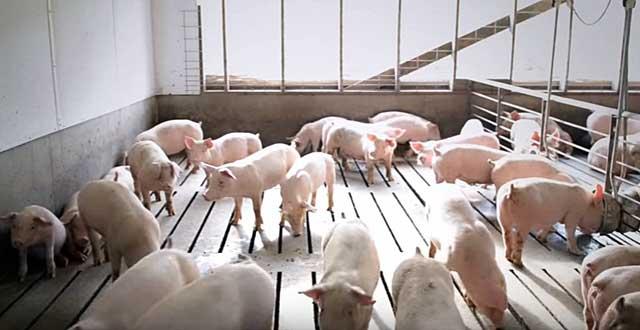 Заболевание быстро распространяется среди животных