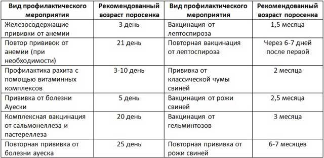 Таблица прививок вьетнамским поросятам