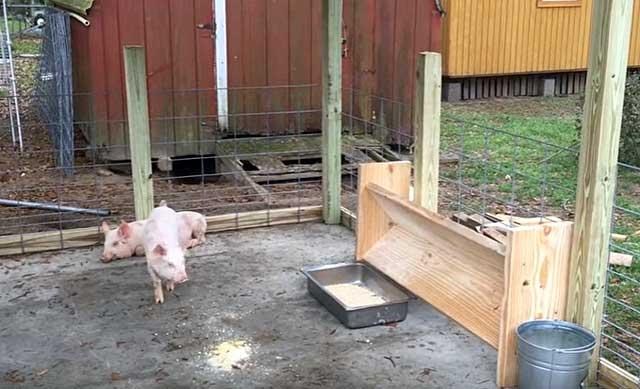 Животные должны развиваться правильно