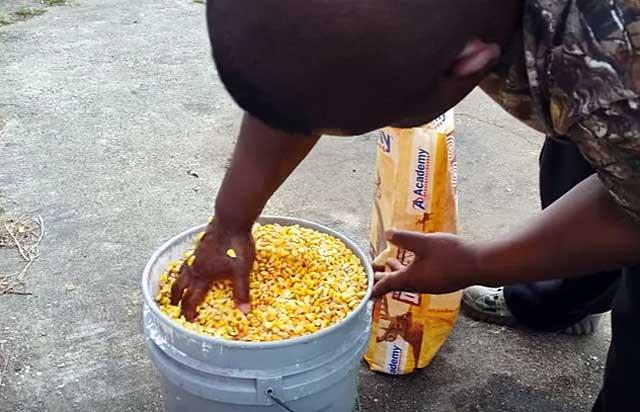 Кукуруза способствует набору веса