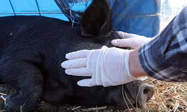 Ветеринар должен осмотреть заболевшую особь