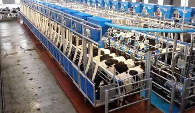 Эффективности можно достигнуть на фермах от 100 голов