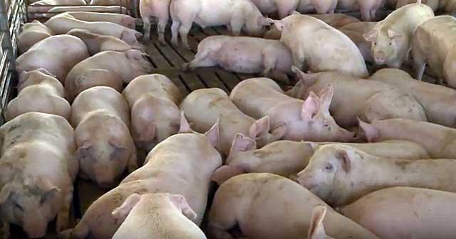 При контакте с животными соблюдайте санитарно-гигиенические нормы