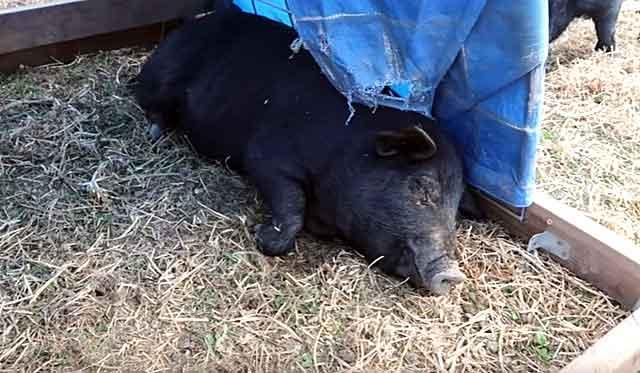 Больное животное надо изолировать