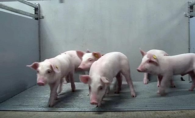 Больных животных надо держать отдельно от здоровых