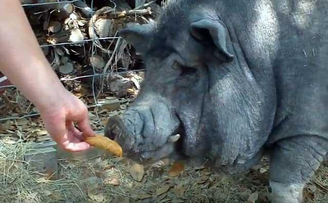 Нет гарантии, что мясо не будет плохо пахнуть