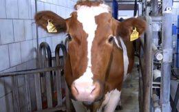 О молочных насосах