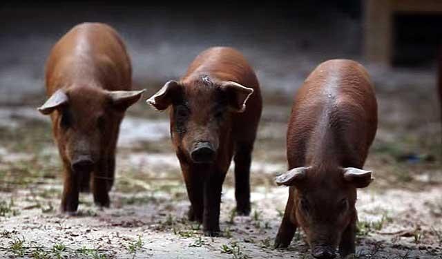 Вирус может поразить животных разных возрастов