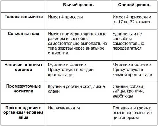 Таблица сравнения признаков бычьего и свиного цепней