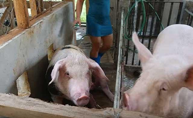 Существуют определенные санитарно-ветеринарные нормы