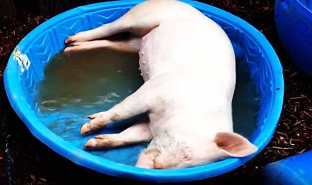 Любят принимать ванны