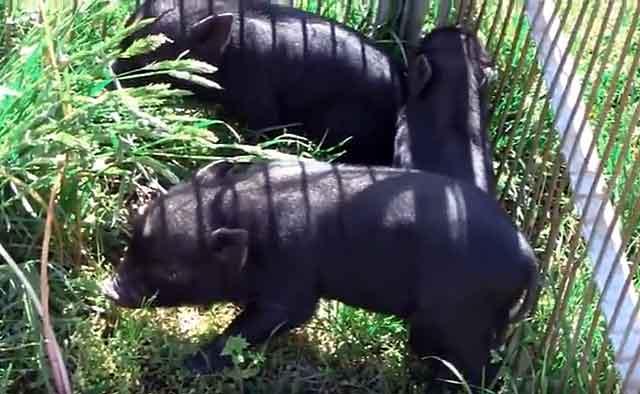 Эти животные умеют различать травы