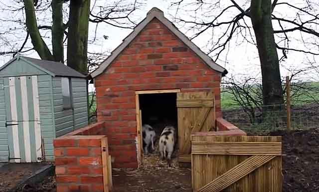 Кирпичный свинарник с площадкой для выгула