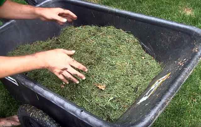 Желательно заготовить травяное сено