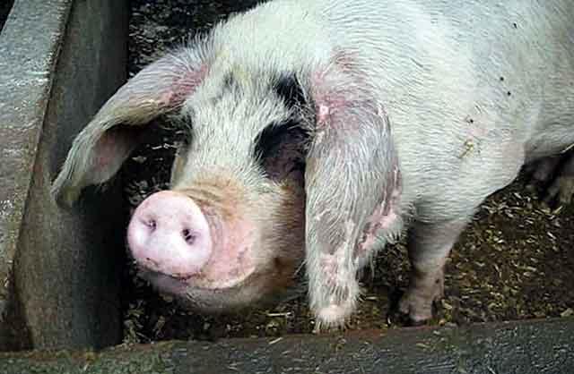 Отраву от грызунов надо раскладывать вне зоны доступа животных