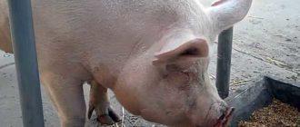 Пищеварительная система животных может усвоить не все продукты