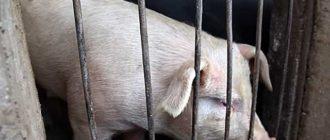 Черви подрывают здоровье животных