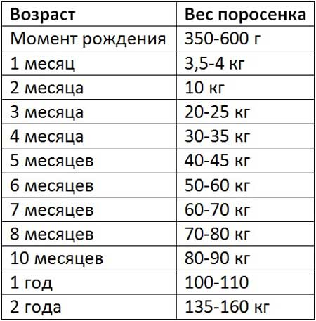 Таблица веса вьетнамских свиней по месяцам