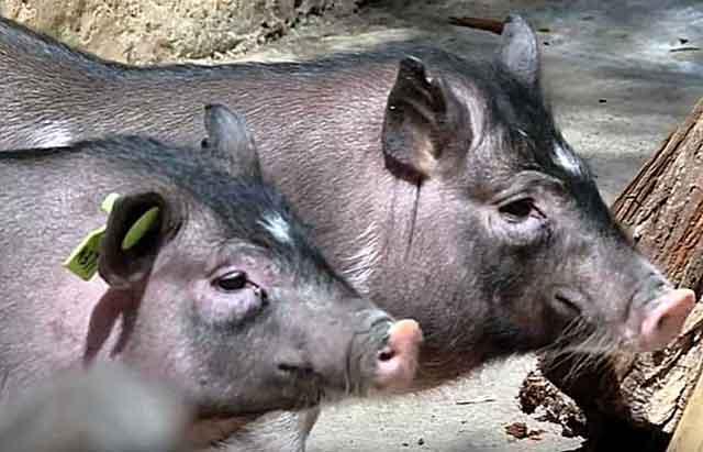 Фермеры должны разбираться в особенностях животных